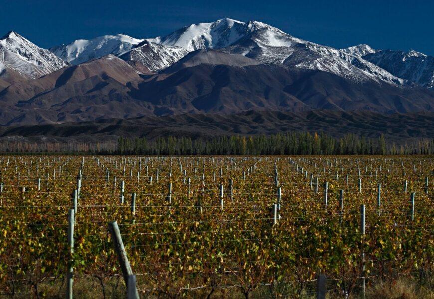 Nuevo plan de negocios: Wines of Argentina reveló cómo posicionará al vino argentino a nivel mundial